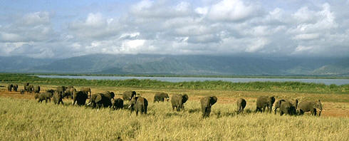 Elephants by the shores of Lake Jipe