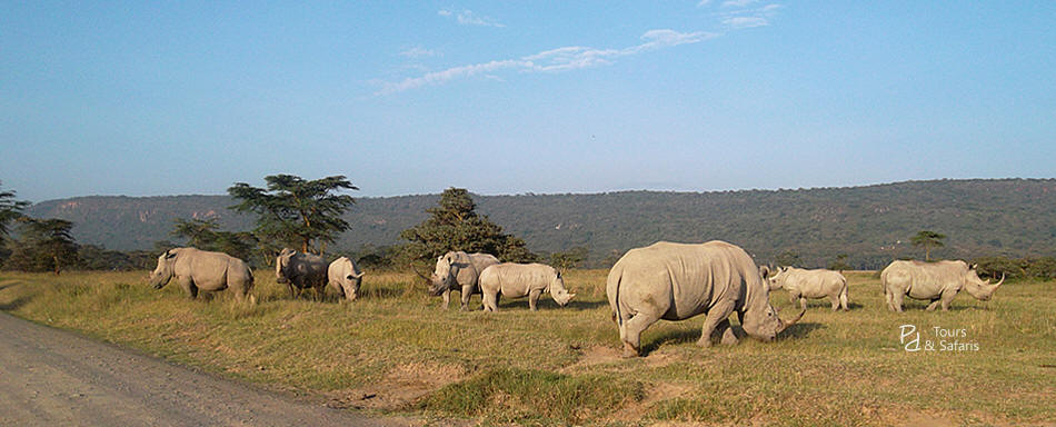 Nairobi Safaris, 2 Days Safari to Lake Nakuru and Lake Naivasha