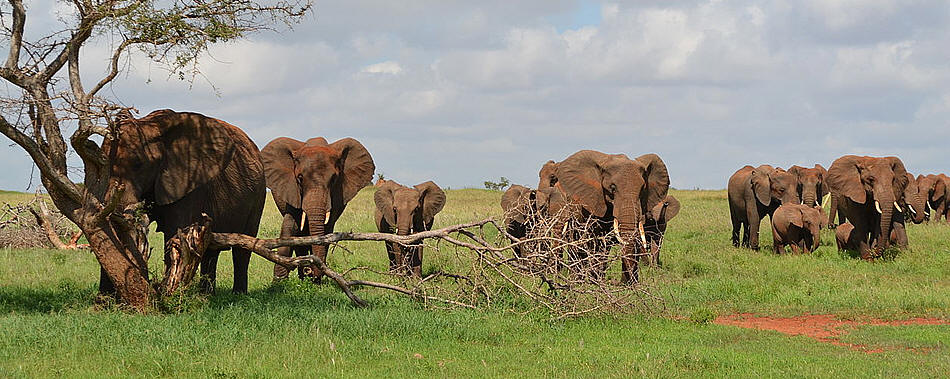 5 Days Mombasa to Tsavo East, Amboseli, Taita Hills Saltlick and Tsavo West Safari