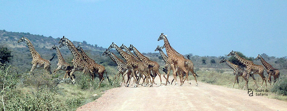 2 Days Mombasa to Tsavo East Safari