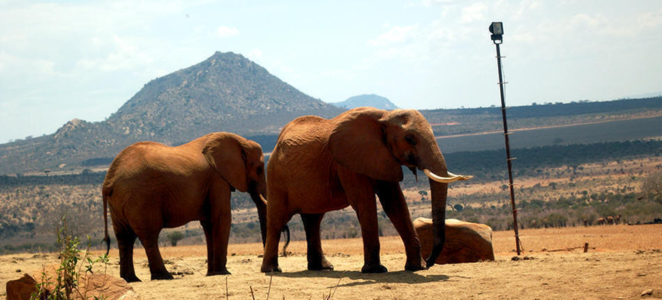 1 Day Mombasa to Tsavo East Safari
